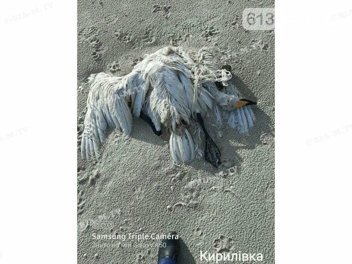 Лебеді залишилися зимувати біля Кирилівки і там же гинуть, фото-1